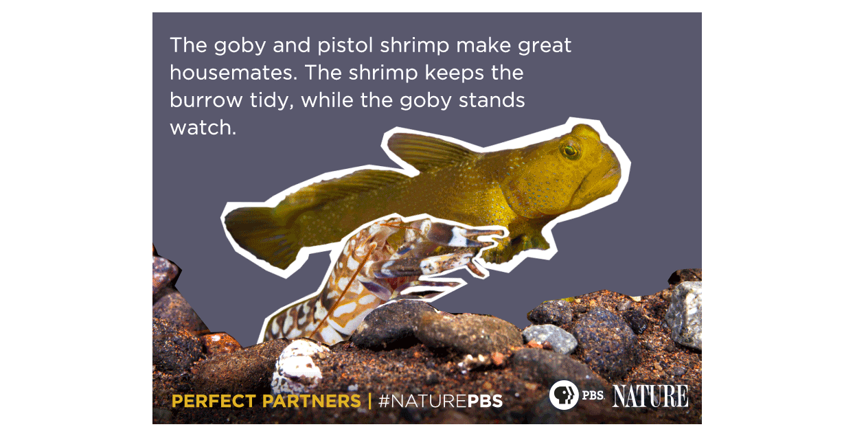 Nature S Perfect Partners Pbs