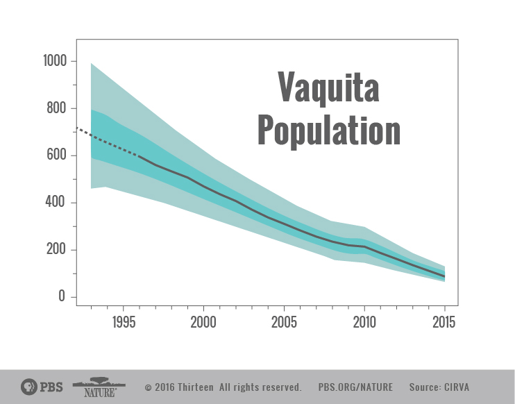 vaquita_decline_01-01