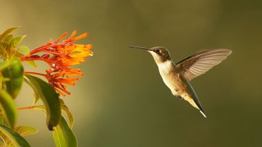 Podcast: Talking Hummingbirds with Ann Johnson Prum