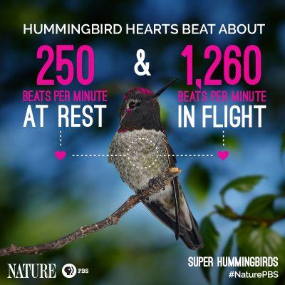 Astonishing Hummingbird Facts
