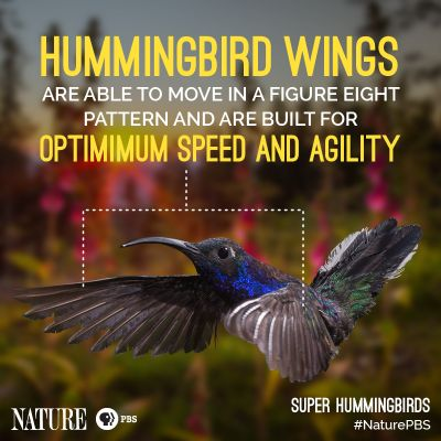 Astonishing Hummingbird Facts