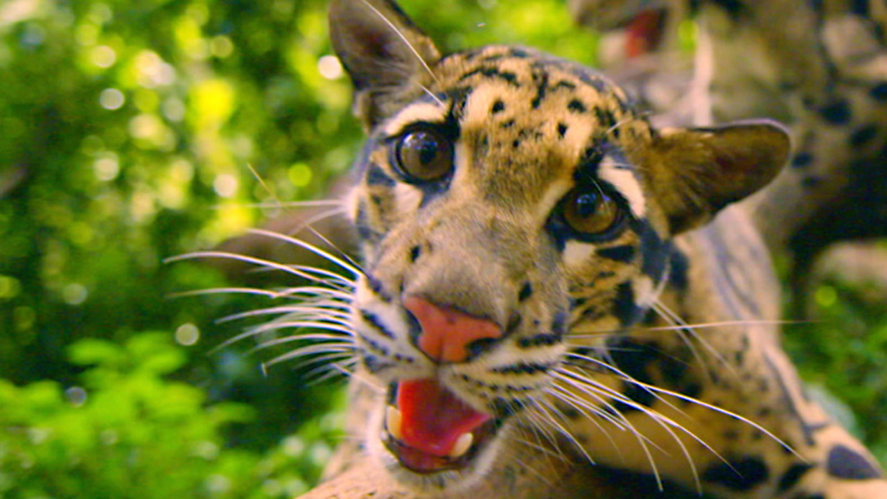the story of cats about nature pbs