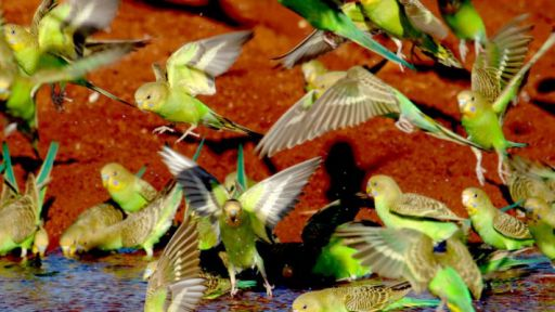 Parrots in the Land of Oz