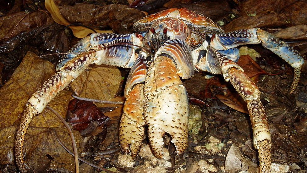 Crustaceans   Nature   PBS