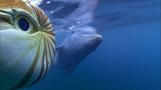 Dolphins: Spy in the Pod | Part 1 -- Baby Dolphin Meets 'Spy Nautilus'