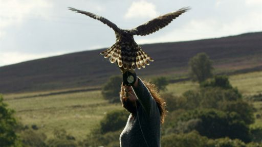 H is for Hawk: A New Chapter -- Falconer Helen Macdonald Takes Goshawk Out for Test Flight
