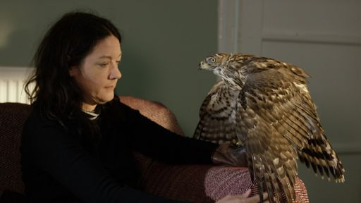 First Meeting Between Helen Macdonald and Goshawk 'Lupin'