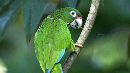 Wildlife Featured in 'Viva Puerto Rico' Weathers Hurricane Maria