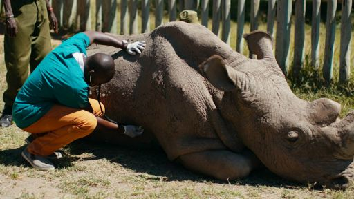The Last Rhino -- Caring for the World's Most Famous Rhino
