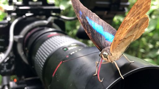 Filming Beautiful Butterfly Footage with the Sex, Lies and Butterflies Crew