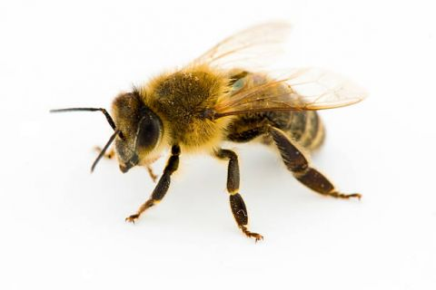 Striking Out in the Love Department? At Least You're Not a Honey Bee. . .