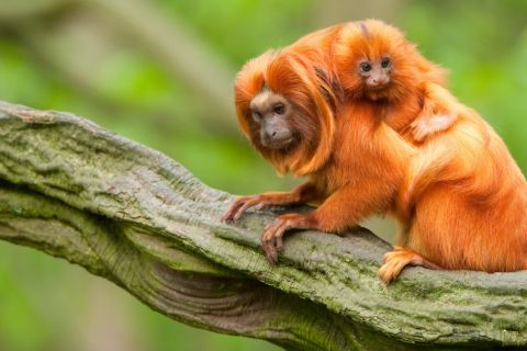 5 Fabulous Fathers in the Animal Kingdom