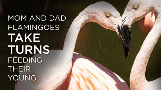 4 Facts about Animal Parenting