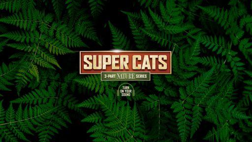 360 Degrees of Super Cats