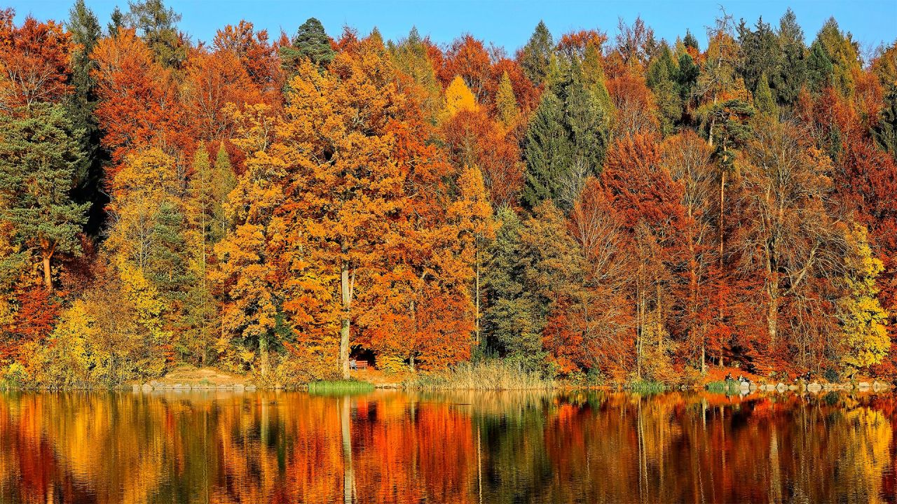 fall nature feel affects leaves climate ricardo gomez angel