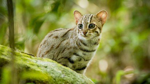 Cat Adaptations: Super Senses