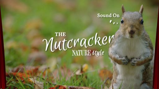 The Nutcracker (NATURE style!)