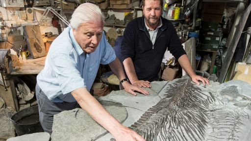 Clip |  Discovering a New Ichthyosaur