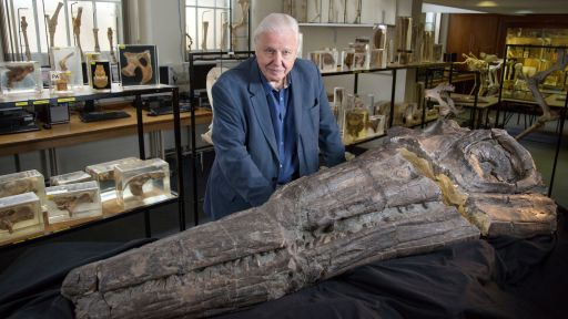 Attenborough and the Sea Dragon | Full Episode | Nature | PBS