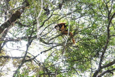 Alejandro Grajal takes us to Papua New Guinea with the Tree Kangaroo Conservation Program