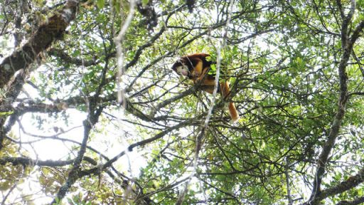 Alejandro Grajal takes us to Papua New Guinea with the Tree Kangaroo Conservation Program