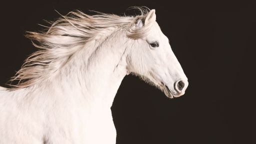 "Official Preview: Equus ""Story of the Horse"""