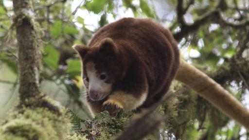 360 Video: Kangaroos and Coffee