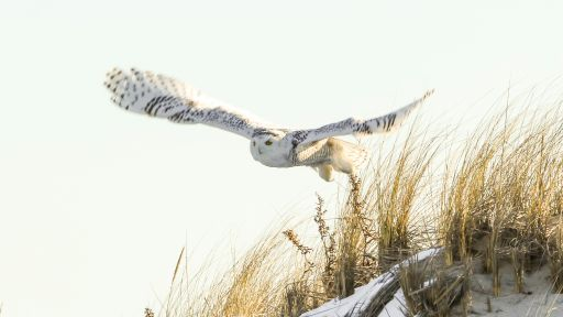 How to Spot Owls this Winter