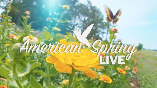American Spring LIVE Homepage