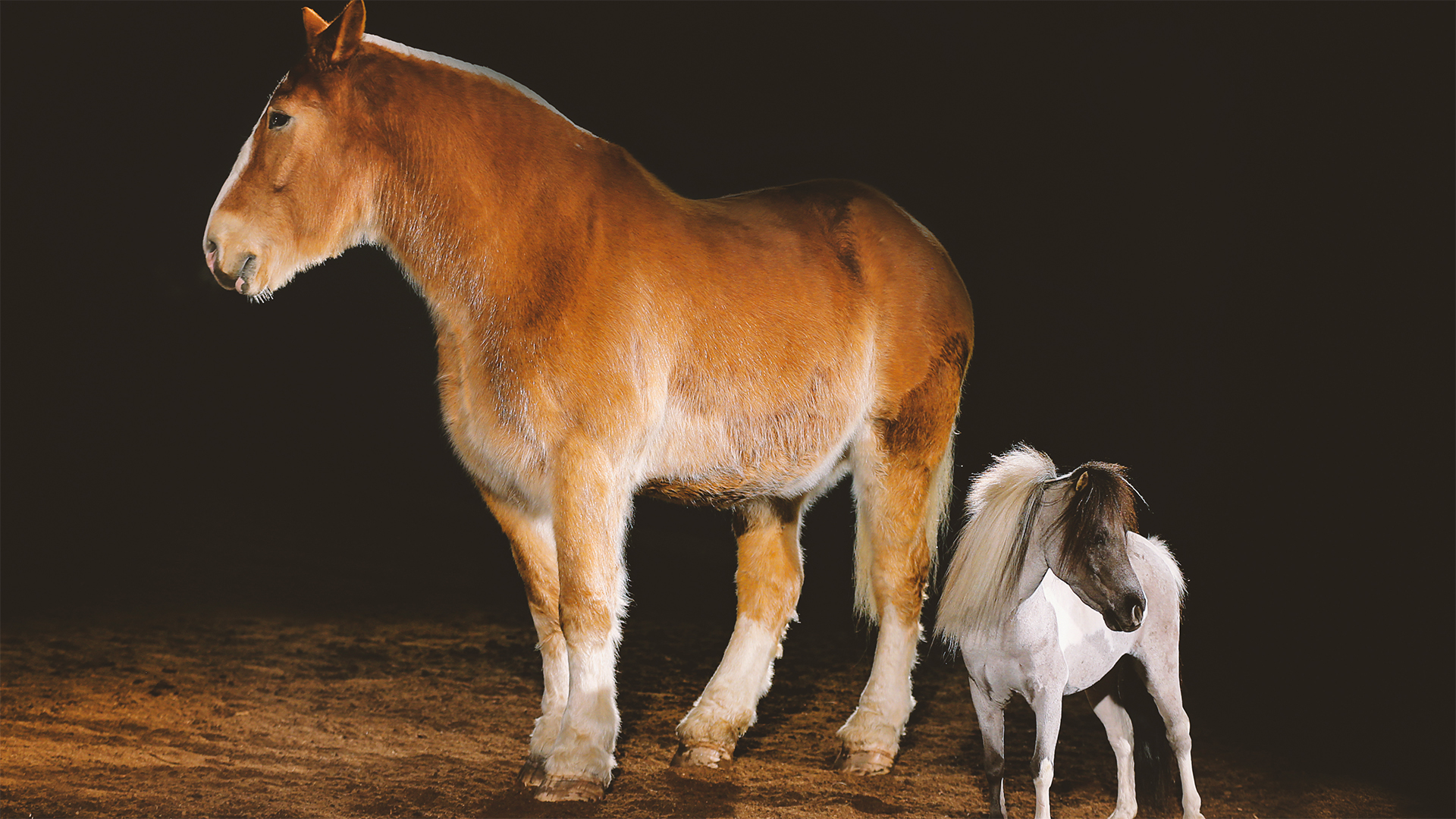 All The Pretty Horses 7 Breeds You Should Know Blog Nature Pbs