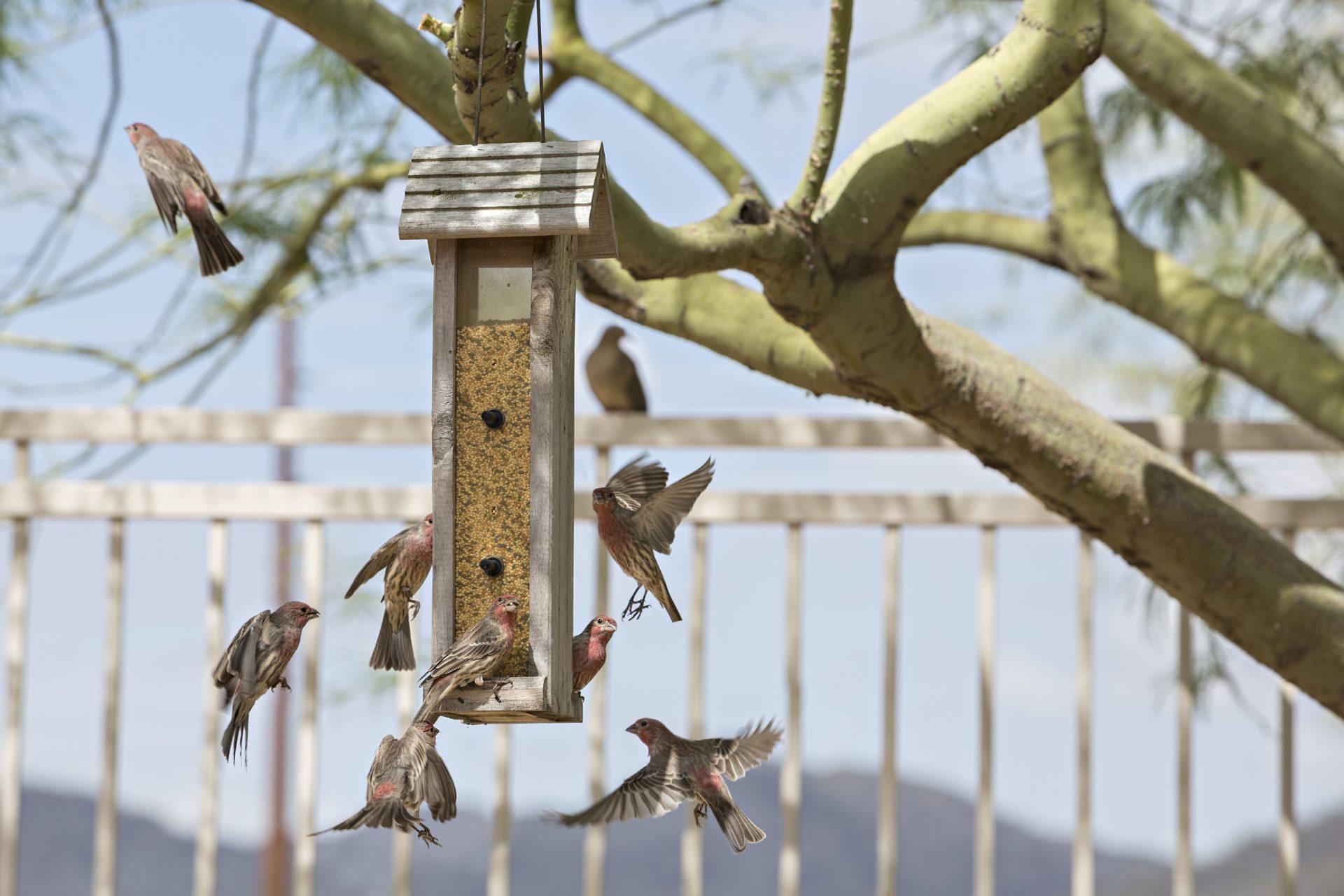 Bird Cams Lab