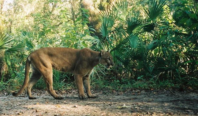 Florida Panthers Blog