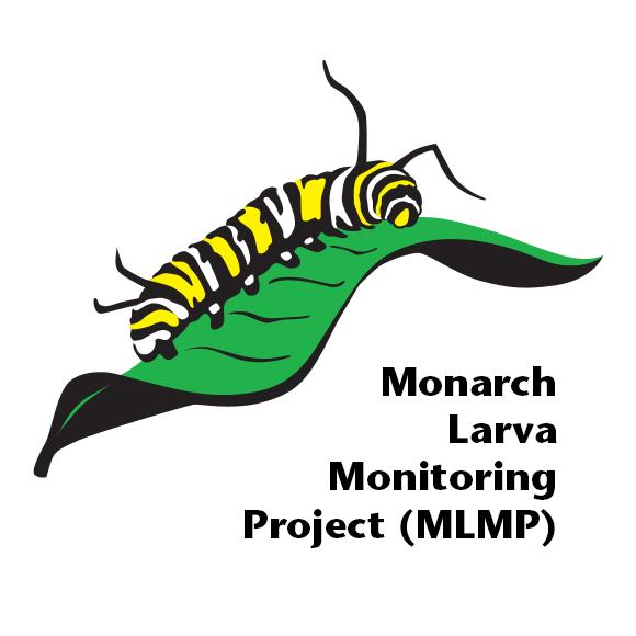 Monarch Larva Monitoring Project