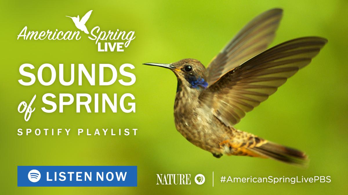 Sounds of Spring Playlist