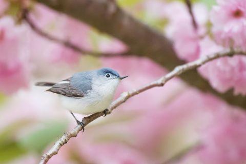 Spring Birdsong Playlist
