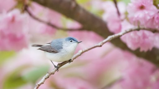 Spring Birdsong Playlist