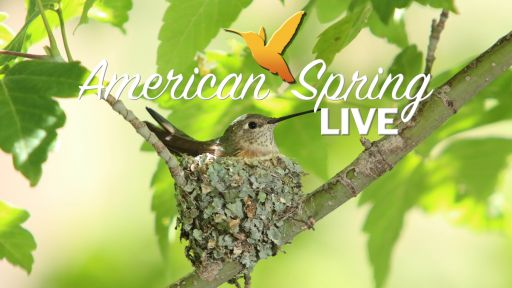 American Spring LIVE! – Classroom Resources