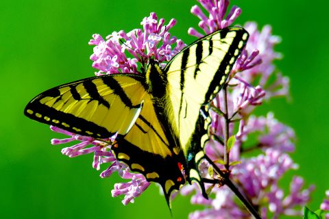 How to Garden for Butterfly Life Cycles