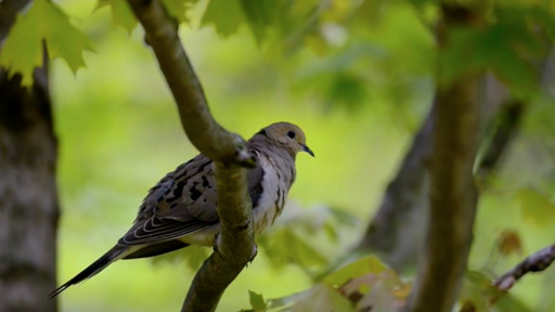 Clip |  Citizen Science Story: Celebrate Urban Birds