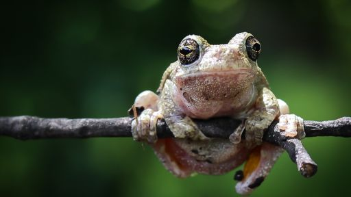 How to Give Frogs and Toads a Leg Up