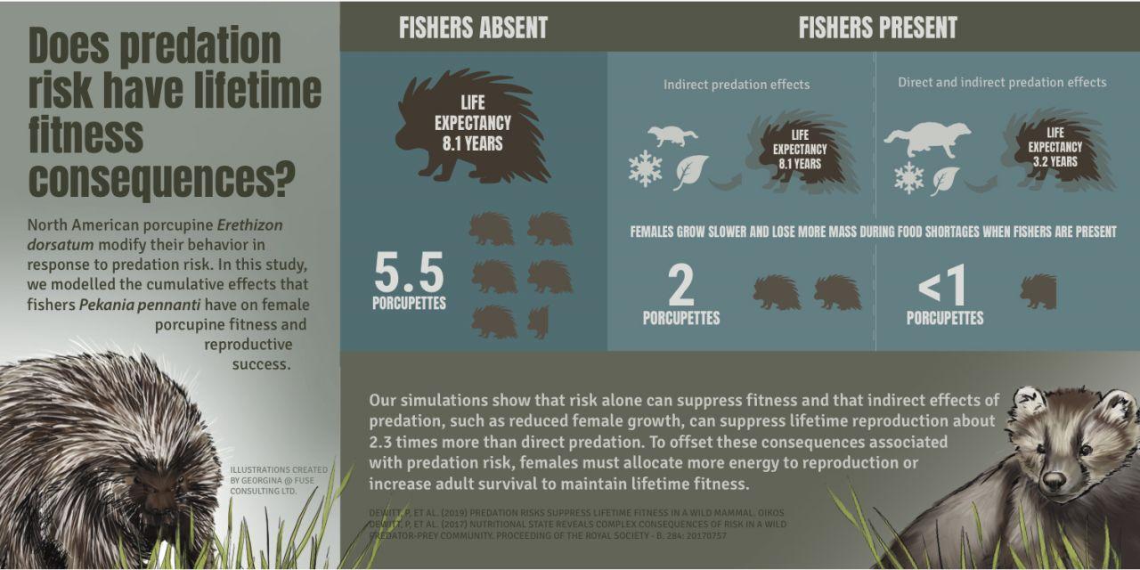 DeWitt Porcupine Infographic