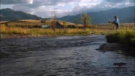 Salmon: Running the Gauntlet -- Education | Restoring Streams