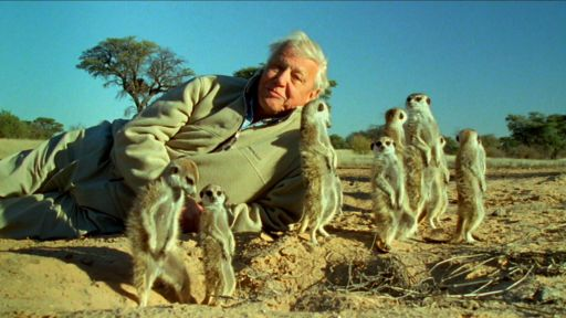 Attenborough's Life Stories: Understanding the Natural World
