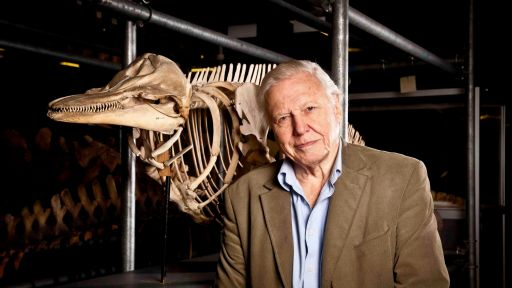 Attenborough's Life Stories: Our Fragile Planet