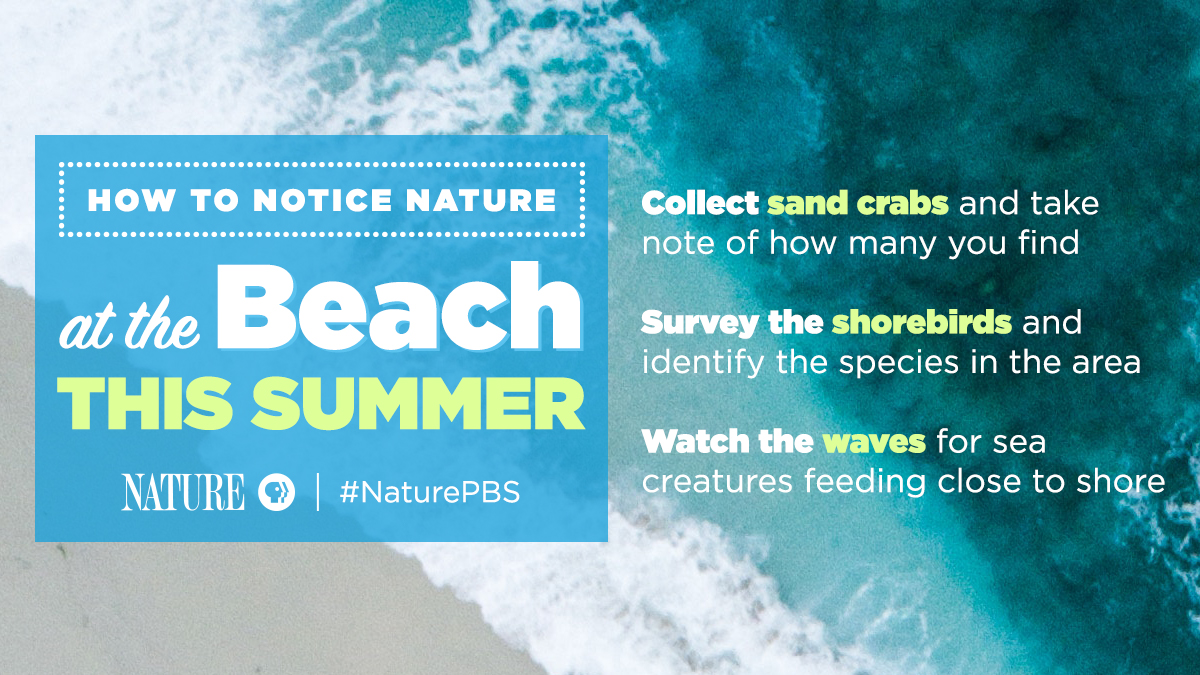 How to Notice Nature at the Beach
