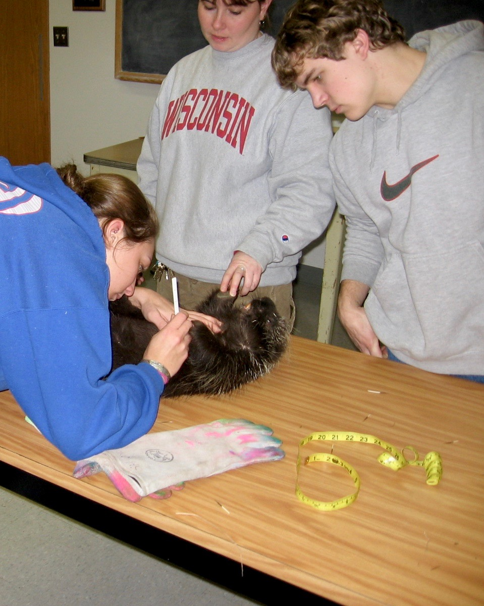 Sandhill Research Students study a porcupine