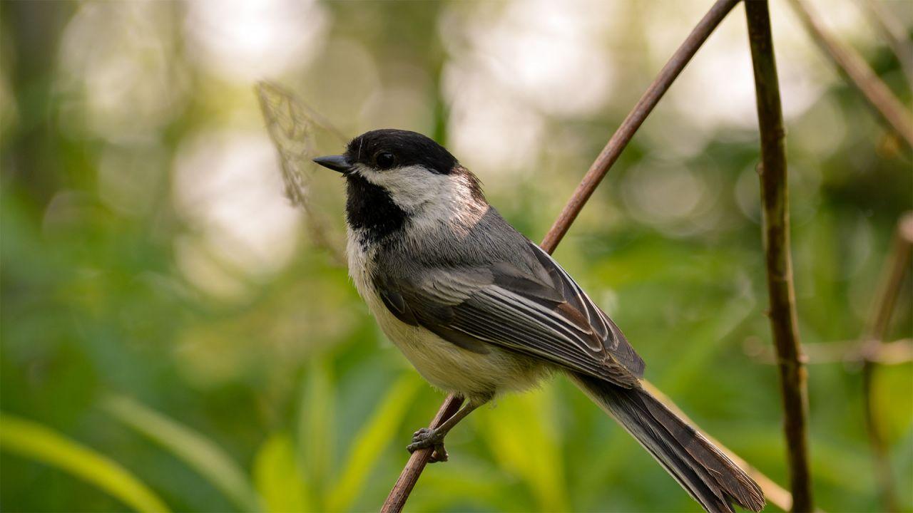 backyard bird