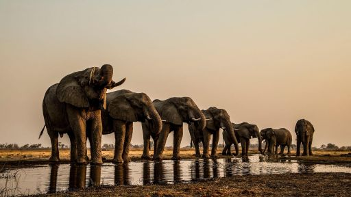 Elephants on the Okavango River