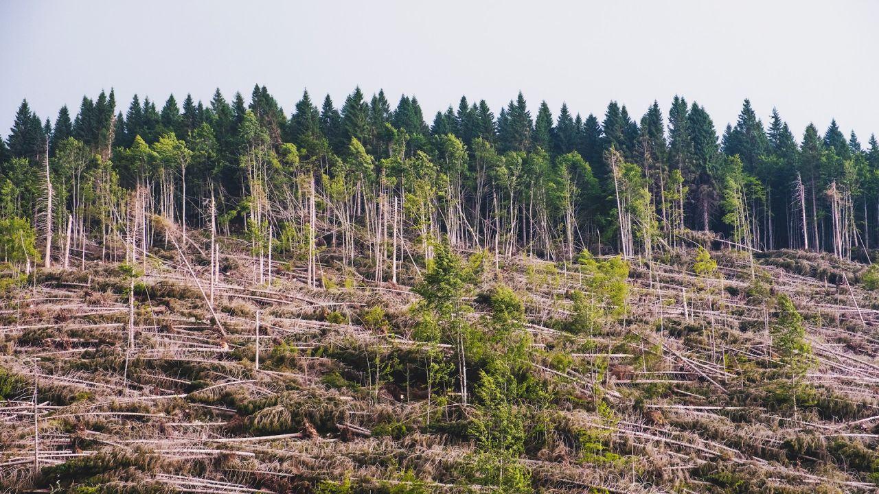 Deforestation affecting climate change