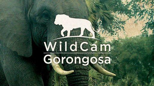 Wild Cam Gorongosa